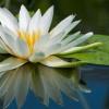 Медитативные практики