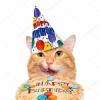День рождения котокафе «Мяулэнд»